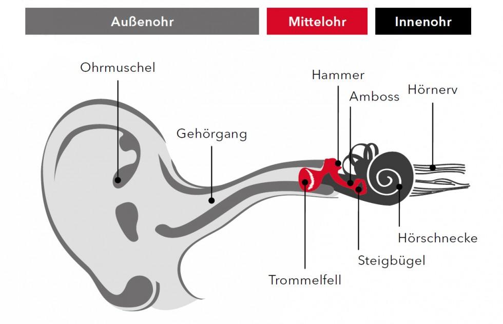So hören wir - Schema des Hörvorgangs