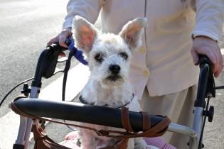 Seniorin mit Rollator und Hund